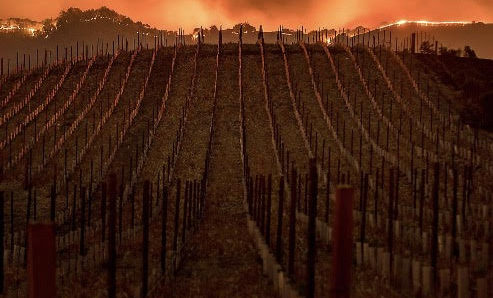 Wine Community Rallies To Provide Aid and Resources to Fire Victims